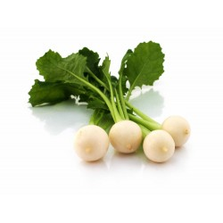 Mini Turnips