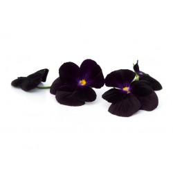 Black Pansies