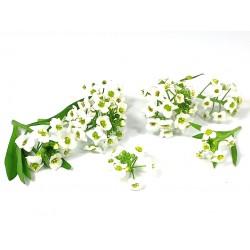 Lobularia bloemen