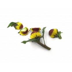 Spilanthes bloemen