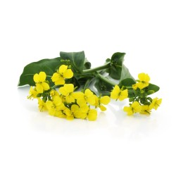 Green Yu Choi Sum Flowers