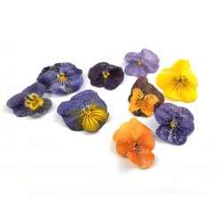 Crystalized pansies